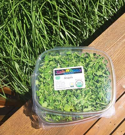 arugula micro greens